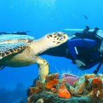 scuba diving charter