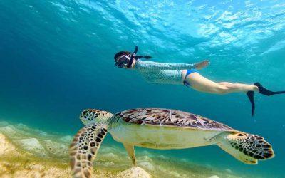catamaran_abundance_snorkeling