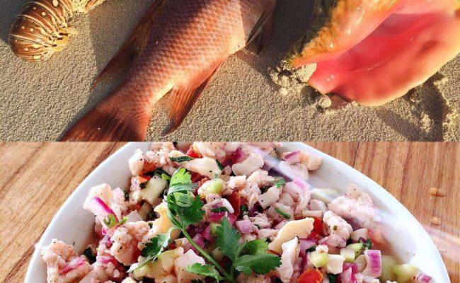 catamaran_doris_cuisine5