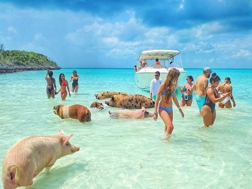 day6_pigs_beach_exumas-1