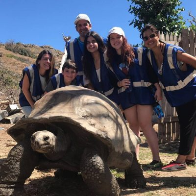 giant_tortoise_2