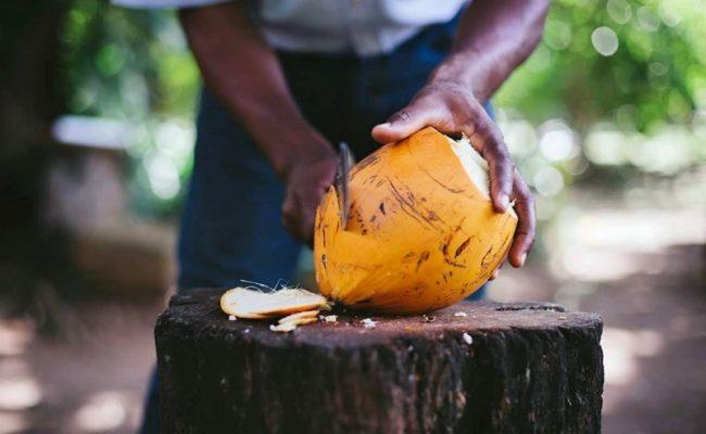 guana_island_coconuts