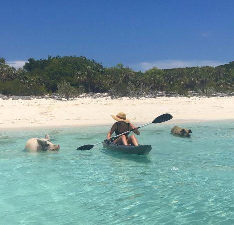 kayaking-with-piggies