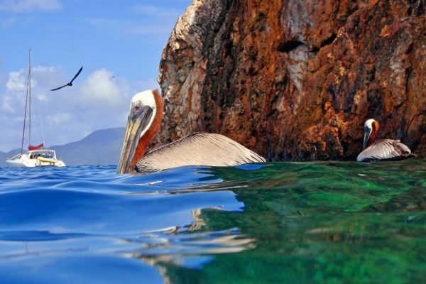 pelicans-at-the-caves-snorkeling