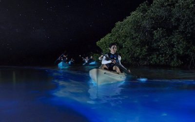 people-kayaking-in-bioluminescent-bay