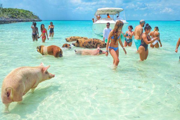 pigs_beach_exuma