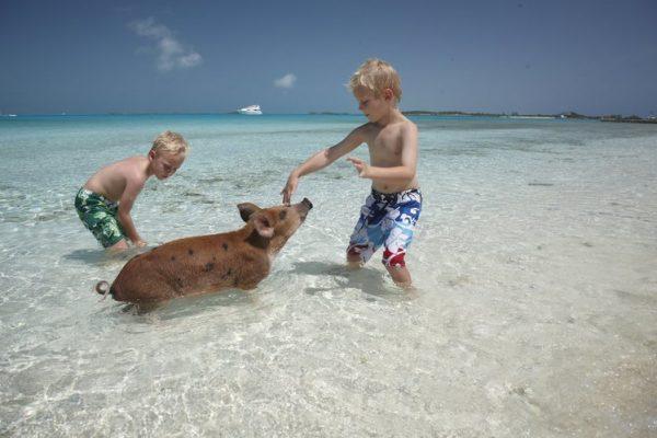pigs_beach_kids