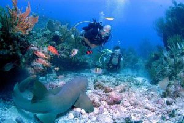 scuba_dive_nurse_shark-300x201