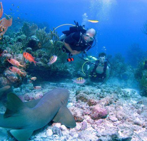 scuba_dive_nurse_shark