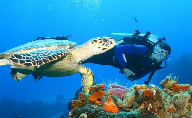 scuba_diving_blog