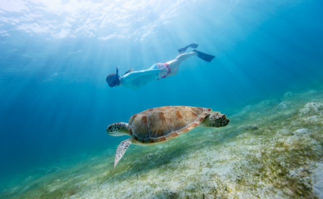 snorkel_with_sea_turtle
