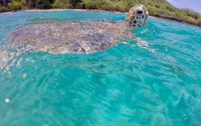turtle_snorkeling